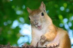 squirrel_2011_0360.jpg: 900x598, 127k (30.05.2012 21:34)