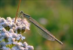Dragonfly.jpg: 947x652, 133k (30.05.2012 21:43)