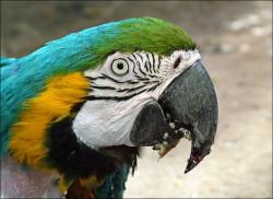 parrot2.jpg: 802x583, 113k (30.05.2012 21:45)