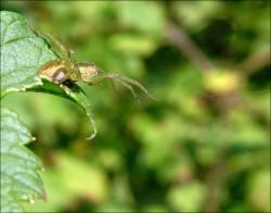 spider.jpg: 800x626, 103k (30.05.2012 21:35)