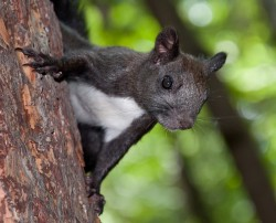 black_squirrel.jpg: 800x647, 238k (30.05.2012 21:34)