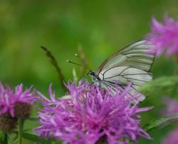 butterfly_2012.jpg: 850x687, 133k (09.07.2012 20:23)