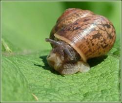 snail2.jpg: 700x593, 95k (30.05.2012 21:43)
