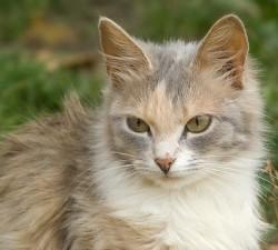 zv_cat_1.jpg: 650x586, 107k (30.05.2012 21:44)