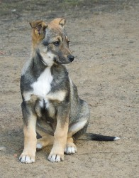 puppy.jpg: 627x800, 156k (30.05.2012 21:46)