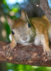 squirrel_2011_0378.jpg: 576x800, 105k (30.05.2012 21:35)