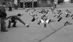 pigeonhunt.jpg: 850x484, 91k (30.05.2012 22:17)