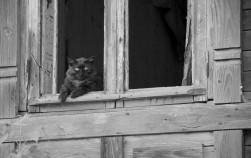 black_cat.jpg: 850x536, 87k (30.05.2012 22:19)