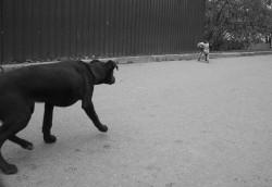 dogs_2009.jpg: 800x550, 91k (30.05.2012 22:19)