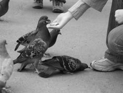 borowsk_pigeons_04.jpg: 800x609, 114k (30.05.2012 22:19)