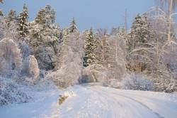 winter_0039.jpg: 900x598, 216k (30.05.2012 22:31)