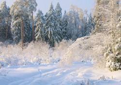 winter_0047.jpg: 900x633, 246k (30.05.2012 22:32)