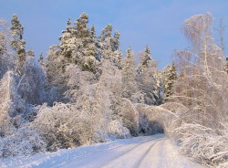 winter_0044.jpg: 900x663, 242k (30.05.2012 22:32)