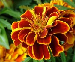 flower.jpg: 802x663, 185k (30.05.2012 22:32)