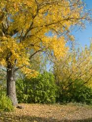 hills_autumn.jpg: 526x700, 230k (30.05.2012 22:29)