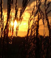 sunset.jpg: 697x800, 148k (30.05.2012 21:55)