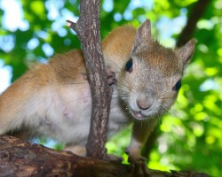squirrel_2011_0368.jpg: 900x721, 169k (30.05.2012 21:34)
