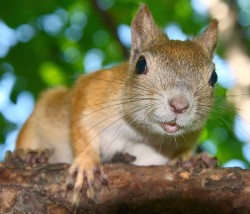 squirrel_2011_0363.jpg: 900x770, 162k (30.05.2012 21:34)