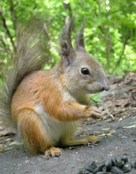 squirrel2105_1.jpg: 545x700, 94k (30.05.2012 21:36)