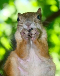 squirrel_2011_0376.jpg: 629x800, 121k (30.05.2012 21:35)
