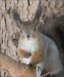 squirrel_3.jpg: 662x802, 105k (30.05.2012 21:44)