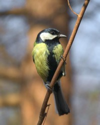 titmouse_2011_04_15.jpeg: 566x710, 45k (30.05.2012 21:43)