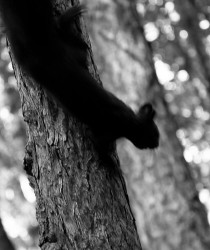 squirrel_ghost.jpg: 589x700, 98k (30.05.2012 22:17)