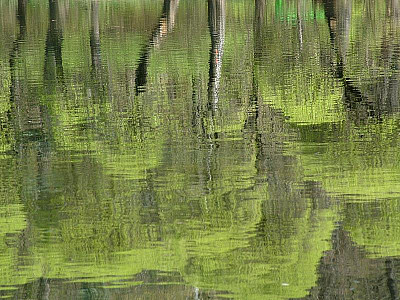reflection.jpg: 800x600, 98k (30.05.2012 22:34)