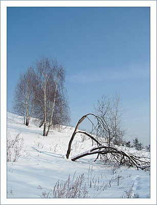 winter_three.jpg: 494x644, 55k (30.05.2012 22:34)